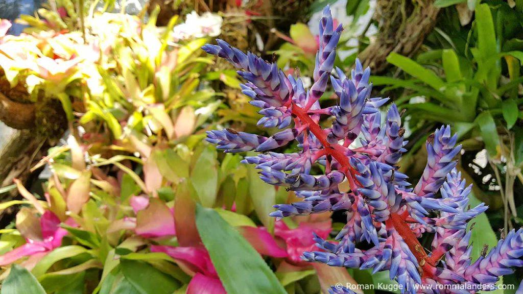 Botanischer Garten Giardini della Mortella Ischia (10)