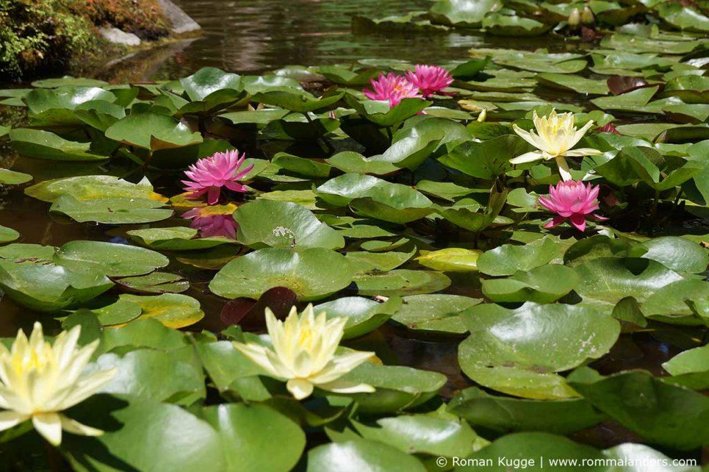 Botanischer Garten Giardini della Mortella Ischia (2)