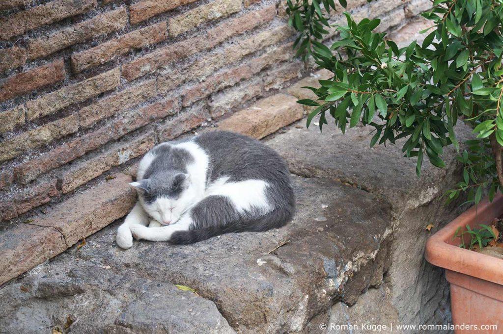 Katzenstation Rom Torre Argentina