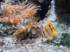 Sea Life Rom Aquarium